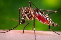 Yes, You Can Blame The DDT Ban For Zika