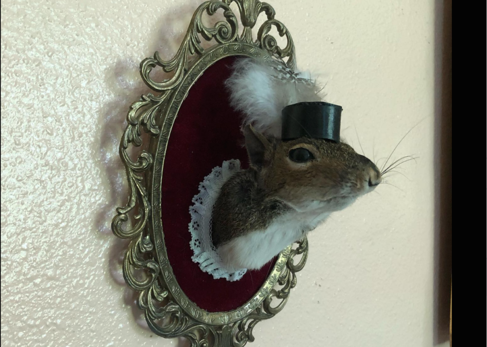 This 'Ethical Taxidermist' Is Making Art Out Of Roadkill