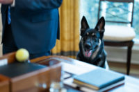 If Joe Biden's Team Will Lie About His Dog Biting People, What <em>Won't</em> They Lie About?